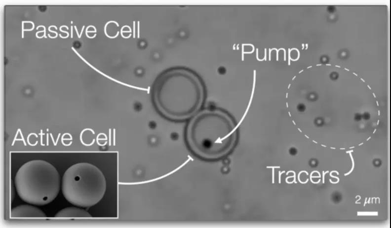 """Nature重磅:离人造生命又近一步?首个具有主动运输能力的""""人造细胞""""问世!"""