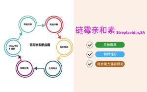 【产品推荐】链霉亲和素(Streptavidin,SA)