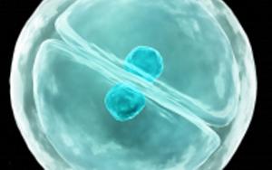"""eLife:细胞真是""""成精了"""",它能模仿人类交流方式,一旦""""关系""""破裂,癌症和糖尿病都找上门"""