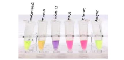 自然光下彩色的纯化蛋白