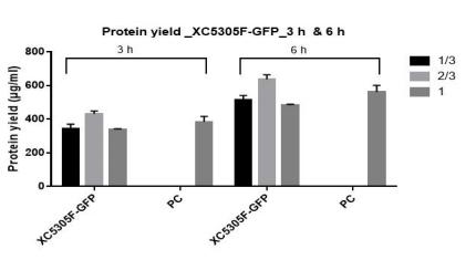 蛋白质产量_XC5305F-GFP_3h & 6h