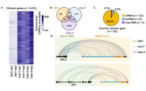 中国科学家联合报道:新冠病毒RNA不具备整合进宿主基因组的能力